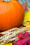Feche acima da abóbora e de Autumn Leaves alaranjados em Backg de madeira Fotos de Stock