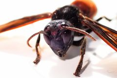 Feche acima da abelha imagens de stock royalty free