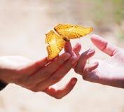 Feche acima da borboleta bonita no dedo da mulher imagens de stock royalty free
