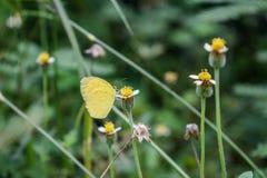 Feche acima da borboleta na flor imagens de stock royalty free