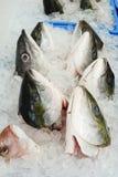 Feche acima da cabeça dos peixes no gelo pronto para a venda no mercado de peixes Os peixes crus dirigem o ingrediente para o est fotografia de stock royalty free