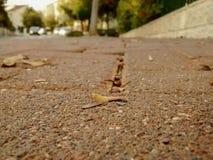Feche acima da caminhada lateral do tijolo com folhas e grões secas e o t Fotografia de Stock Royalty Free