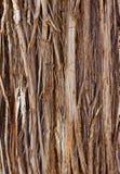 Feche acima da casca de árvore imagens de stock royalty free