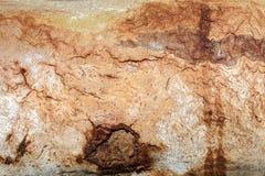 Feche acima da casca de árvore velha textured Imagem de Stock