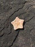 Feche acima da estrela do mar na rocha da obsidiana fotografia de stock royalty free