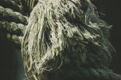 Feche acima da extremidade de uma corda No branco foto de stock