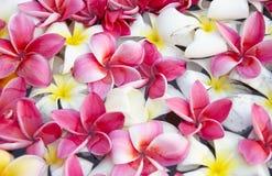 Feche acima da flor Fotos de Stock
