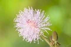 Feche acima da flor Fotografia de Stock