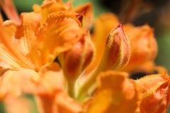 Feche acima da flor Imagem de Stock Royalty Free