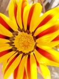 Feche acima da flor amarela Imagens de Stock