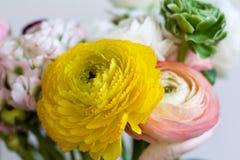 Feche acima da flor amarela bonita do botão de ouro Fotos de Stock Royalty Free