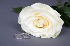 Feche acima da flor e das alianças de casamento bonitas da rosa do branco sobre g Fotografia de Stock