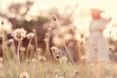 Feche acima da flor no campo com jovem mulher do borrão fotografia de stock