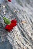Feche acima da flor vermelha do cravo vista na pedra memorável fotos de stock
