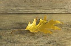 Feche acima da folha amarela do outono Fotos de Stock Royalty Free