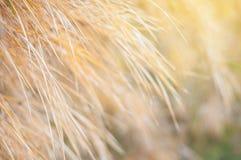 Feche acima da folha de bambu seca com fundo da luz solar Imagem de Stock Royalty Free