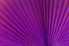 Feche acima da folha de palmeira Fundo abstrato, tom surreal roxo imagens de stock