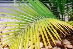 Feche acima da folha de palmeira na árvore no projeto ajardinando no complexo de construção moderno da arquitetura Foco seletivo  Fotografia de Stock Royalty Free