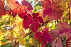 Feche acima da folha do outono, Dorking, Surrey, Inglaterra, Reino Unido fotos de stock royalty free