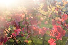 Feche acima da folha do outono, Dorking, Surrey, Inglaterra, Reino Unido fotografia de stock royalty free