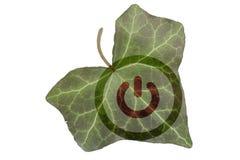 Feche acima da folha verde da hera com símbolo de começo destacado imagem de stock