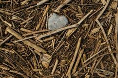 Feche acima da forma de um coração de pedra cercado por partes pequenas de varas de madeira imagem de stock royalty free