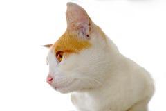 Feche acima da foto da cara do gato Foto de Stock