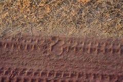 Feche acima da fuga do tigre na estrada no parque nacional Foto de Stock Royalty Free