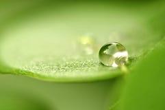 Feche acima da gota macro super da água do tiro na folha e na flor Foto de Stock
