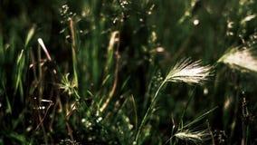 Feche acima da grama contra mais grama foto de stock