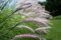 Feche acima da grama em um dia ensolarado Imagens de Stock