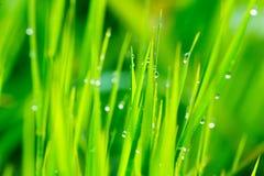 Feche acima da grama fresca Imagens de Stock