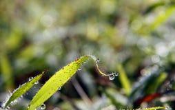 Feche acima da grama fresca com gotas de orvalho Imagens de Stock Royalty Free