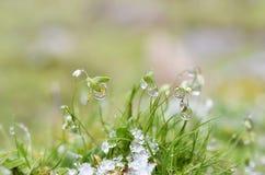 Feche acima da grama gelado Fotos de Stock Royalty Free