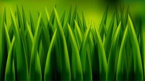 Feche acima da grama grossa fresca Imagens de Stock Royalty Free