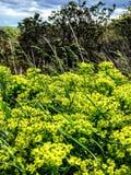 Feche acima da grama selvagem e do céu fotografia de stock royalty free