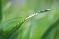 Feche acima da grama verde da mola fresca foto de stock