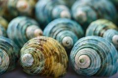 Feche acima da ideia de shell decorativos e coloridos do mar fotografia de stock