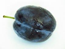 Feche acima da ideia de uma obscuridade - ameixa azul no fundo branco Ameixa de ameixa, damascene imagens de stock royalty free