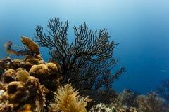 Feche acima da ideia de variedades da vida marinha de esponjas, de ramificação e de coral do vaso no recife nas Caraíbas Imagens de Stock Royalty Free