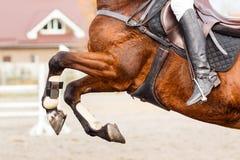 Feche acima da imagem do cavalo de salto sobre o obstáculo foto de stock