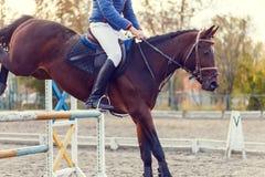 Feche acima da imagem do cavalo de salto sobre o obstáculo Fotografia de Stock Royalty Free