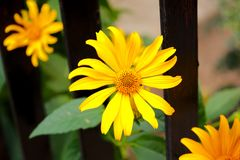 Feche acima da imagem da flor do verão fotos de stock