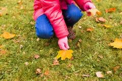 Feche acima da menina que recolhe as folhas de outono Fotografia de Stock