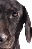 Feche acima da metade de uma face do cão Fotos de Stock