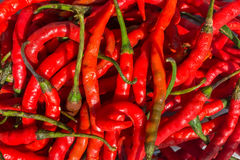 Feche acima da natureza vermelha Chili Texture Background Imagens de Stock Royalty Free