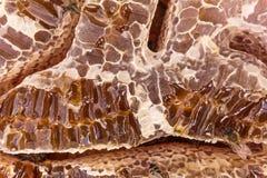 Feche acima da opinião honeycells enchidos mel e abelhas de trabalho foto de stock royalty free