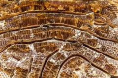 Feche acima da opinião honeycells enchidos mel e abelhas de trabalho imagem de stock