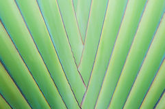 Feche acima da palmeira tropical imagens de stock