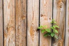 Feche acima da parede de madeira marrom envelhecida Conceito novo da vida Imagens de Stock Royalty Free
